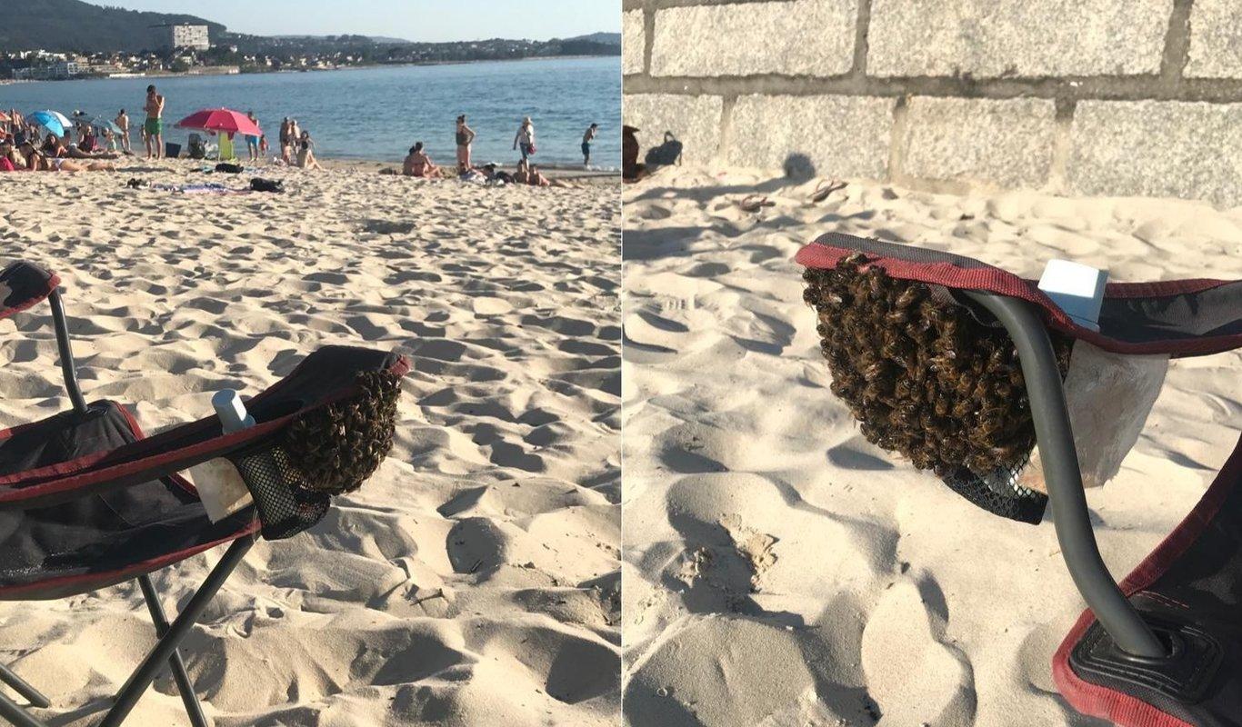 Una colonia de abejas anida en la silla de playa de una bañista en Samil