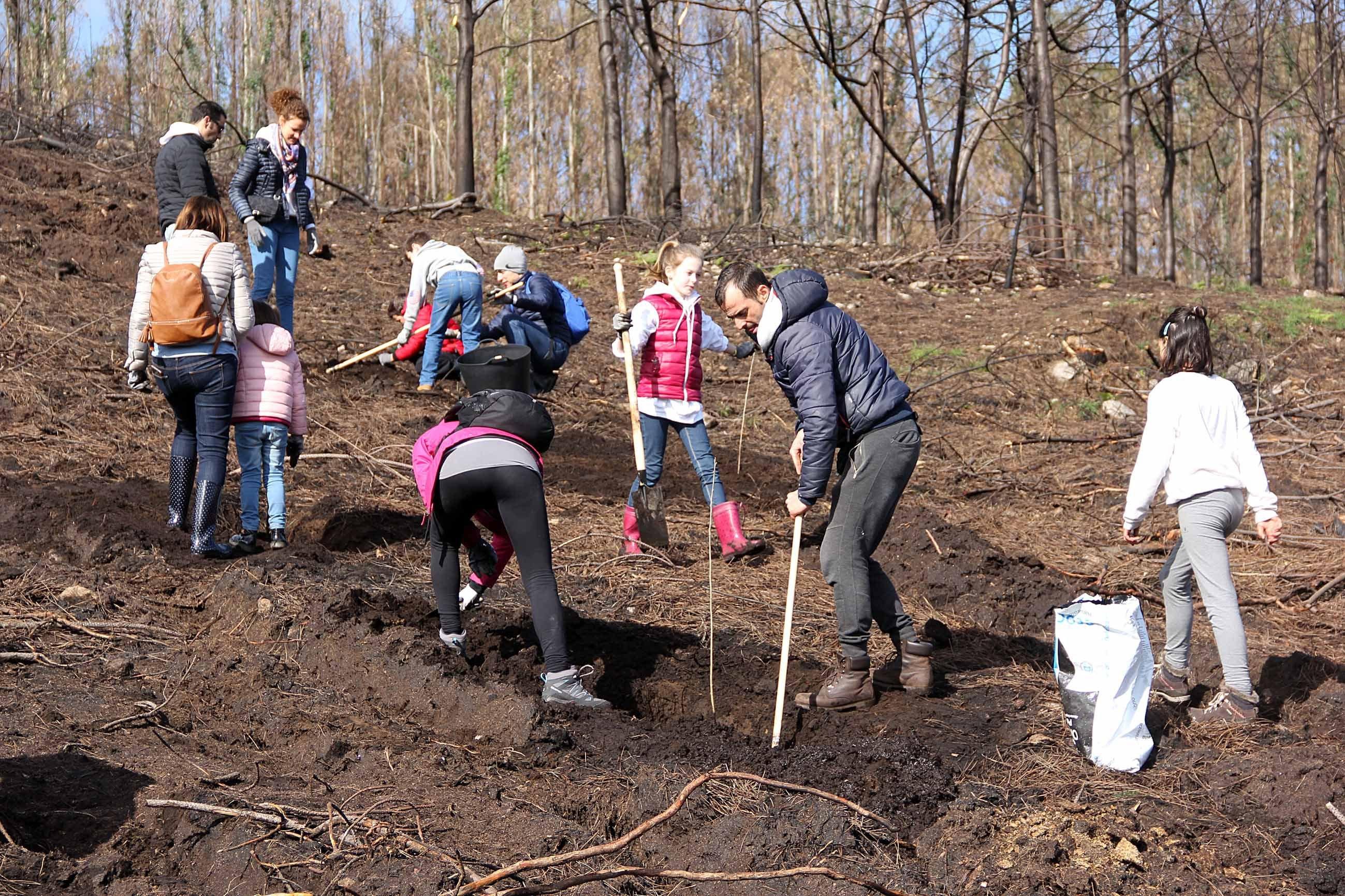 Un centenar de voluntarios para plantar 1.000 árboles - Vigo ...